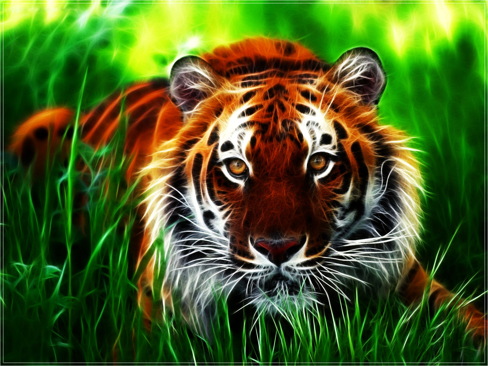 Hd wallpaper download for pc - Tiger