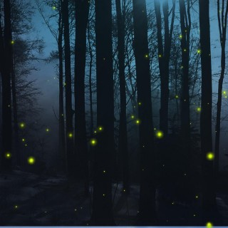 Firefly hd wallpapers